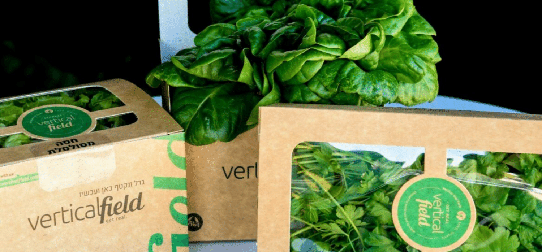 Supermarket parking lots transformed into urban farms